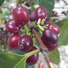 4月1日より出荷開始!ニカラグア ジャバニカ・バジェ・ダタンリ スペシャルティコーヒー生豆