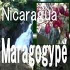 ニカラグア サンタ・マウラ マラゴジペ スペシャルティコーヒー