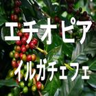 エチオピア イルガチェフェ G/1 スペシャルティコーヒー