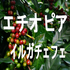エチオピア イルガチェフェ G1 スペシャルティコーヒー